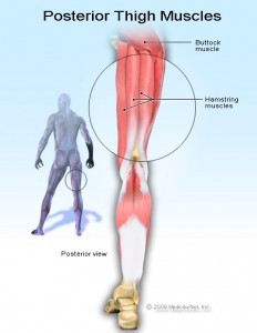www.hoylesfitness.com, hamstring stretch, lower back pain, Muscle Tightness and Joint Injury