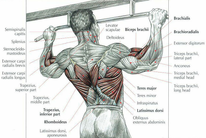 How To Do Pull Ups Hoyles Fitness Personal Trainer Blog